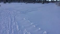 igjennblaste skispor